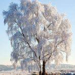AMB.33312130 Frozen Tree papírszalvéta 33x33cm,20db-os