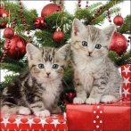 AMB.33314670 Christmas Kitten papírszalvéta 33x33cm, 20db-os